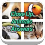 Close Up Animals Answers
