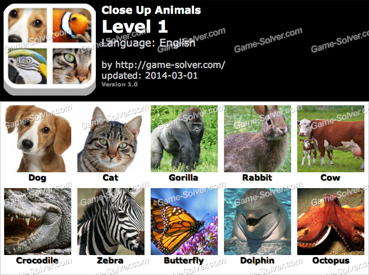 Close Up Animals Level 1
