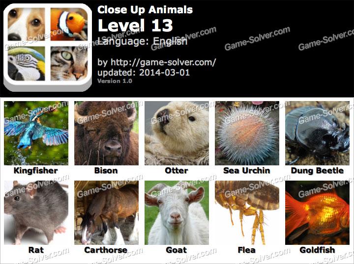 Close Up Animals Level 13 Game Solver