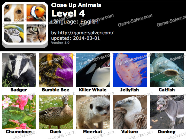 Close Up Animals Level 4