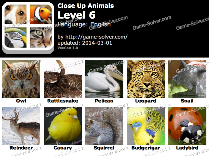 Close Up Animals Level 6