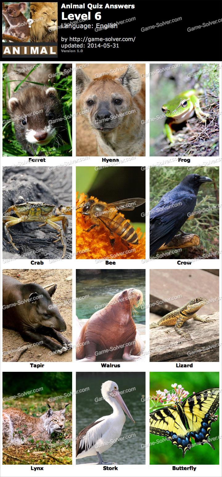 Animal Quiz Level 6 - ...
